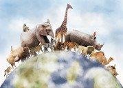 Ten Interesting Animal Etymologies